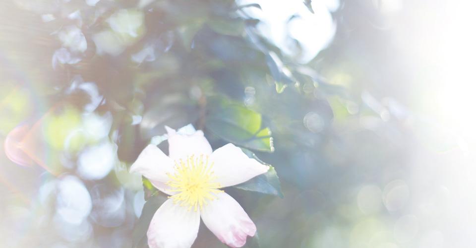 spiritual Counseling Love Lightへようこそ